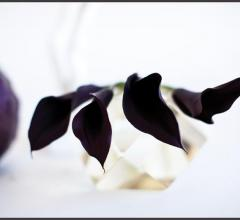 """Calla Lillies with Cabbage"""