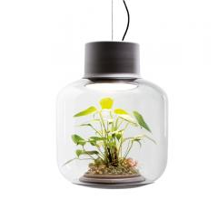 Glass Mygdal Plantlight with LED lighting from Nui Studio