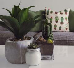 Unsplash succulents on coffee table